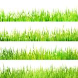 Green grass lush bush with camomiles. EPS 10 Royalty Free Stock Photos