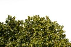 Green grass lush bush on grass in garden.  Royalty Free Stock Photo
