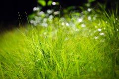 Green grass macro. Macro photograph of green grass with beautiful bokeh Royalty Free Stock Photo