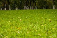 Green Grass Macro Stock Photography