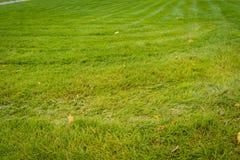 Green Grass Macro Stock Image