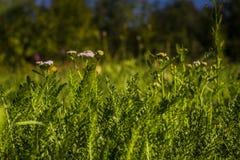 Green Grass Macro Stock Images