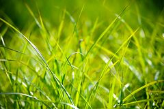 Green Grass Macro Photography Stock Image