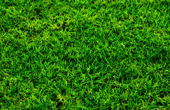 Green Grass Macro Texture Stock Photos