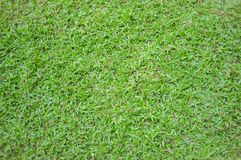 Green grass. In Mahidol University ,Thailand Royalty Free Stock Images