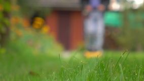 Green grass and man with lawn mower approaching the camera. Bokeh background shot Stock Image