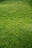 Green grass mat Stock Photo