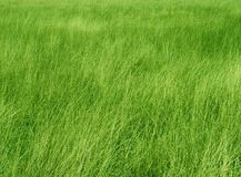 Green Grass Meadow Stock Images