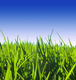 Green grass meadow Stock Photography