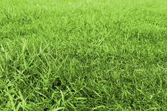 Green grass meadow Royalty Free Stock Photo