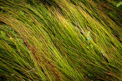 Green grass on meadow Royalty Free Stock Photography