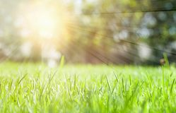 Green grass meadow background in sunny day.  stock photo