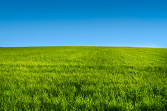 Green grass meadow with blue sky r. Green grass meadow with blue sky in summer Royalty Free Stock Images