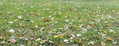 Green grass in the meadow, covered with autumn leaves. royalty free stock photos