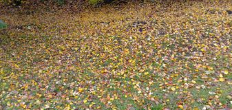 Green grass in the meadow, covered with autumn leaves. stock photography