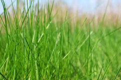 Green grass in the meadow Stock Images