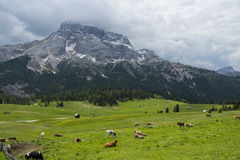 Green grass meadow in the mountains of Italy Royalty Free Stock Image