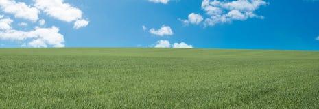Green grass meadow panorama Stock Photo