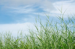 Green grass meadow and sky Royalty Free Stock Photography