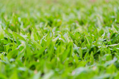 Green grass on the meadow. Soft focus, fresh green grass, warm sun light on the meadow Royalty Free Stock Photo