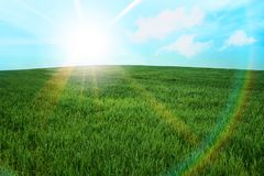 Green grass meadow sunburst summer Royalty Free Stock Image