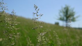 Green grass from a meadow with tree, Close up Royalty Free Stock Image
