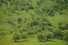 Green grass meadow with trees. On a sunny spring day in romanian mountains, near sibiu, transylvania Stock Photos