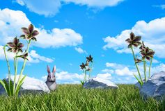 Green grass meadow with wildflowers and hare with cloud blue sky Royalty Free Stock Images