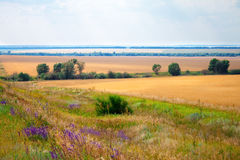 Green grass meadows and fields landscape Stock Images