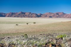 Meadows at Kanaan Camp. Green grass meadows at Kanaan Camp, Namibia, Africa, between Luderitz and Sesriem royalty free stock images