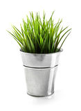 Green grass in metal bucket isolated on white Stock Photo
