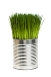 Green grass and metal can Royalty Free Stock Images