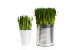 Green grass and metal can Royalty Free Stock Photos