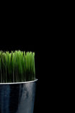 Green grass in a metal container Royalty Free Stock Photos