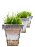 Green Grass in metal containers Stock Image