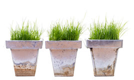Green Grass in metal containers Stock Photo