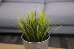 Green grass in metal pot Stock Images