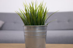 Green grass in metal pot. On table Stock Images
