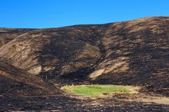 Green grass in the middle of fire charred valley blue sky. Hillside charred by the wild fire that raged through Napa and Sonoma counties in California, fence stock photos