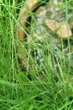 Green grass with morning dew Royalty Free Stock Photos