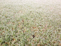 Green grass and morning dew Royalty Free Stock Photo