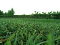 Green grass in the morning stock photos