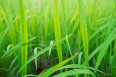 Green grass in the morning light. Green grass in the morning light Stock Photos