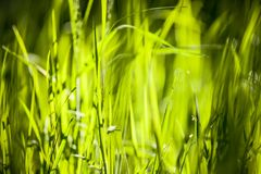 Green grass in morning sun light royalty free stock images