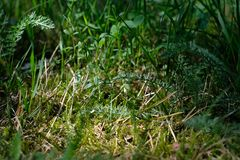 Green grass and moss close-up picture. A close-up picture of herbs, grass and moss on a sunny summer day royalty free stock images