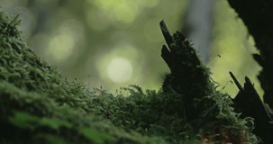Green grass and moss on the trunk of a tree 4K FS700 Odyssey 7Q stock video footage