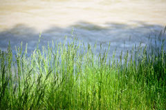 Green grass in a mountain valley at sunset. At sunset with a blurred background Stock Photos