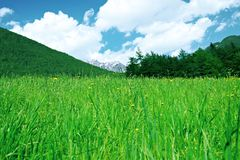 Green grass, mountains and forest below clouds. Royalty Free Stock Photography