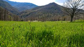 Green grass and mountains stock images