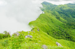 Green grass moutain and white fog Stock Photos
